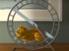 keyvis_detur_hamster_spot1_still004